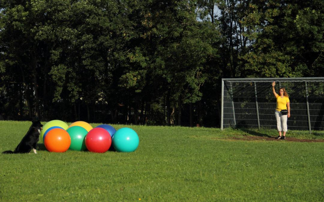Treibball-Turnier am 02. Mai 2020 in 7341 Markt St. Martin (Österreich)