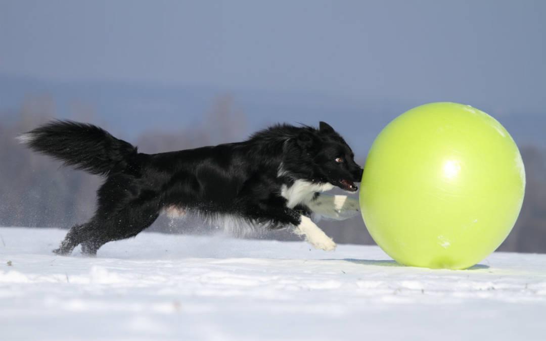 """Beim Treibball-Spiel """"Insel hüpfen"""" mit viel Spass die Basisübungen verbessern"""