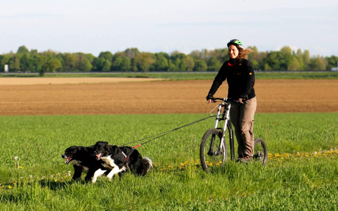Seminar – Zughundesport / Dog-Scootering am 01. Mai 2020 in 7341 Markt St. Martin (Österreich)