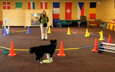 Longieren mit Hund – drei Varianten an einem Kreis