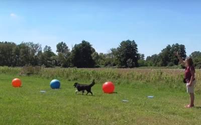 Durch Treibball Spiele wie dem Insel hüpfen mit viel Spass die Basics festigen