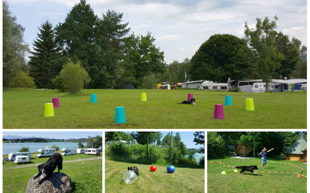 Seminarwoche vom 22.-26. Oktober 2019: Treibball, Longieren und Tricktraining auf dem Campingplatz in 86983 Lechbruck am See