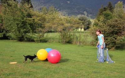 Treibball – der vielseitige Trendsport – Teil 1