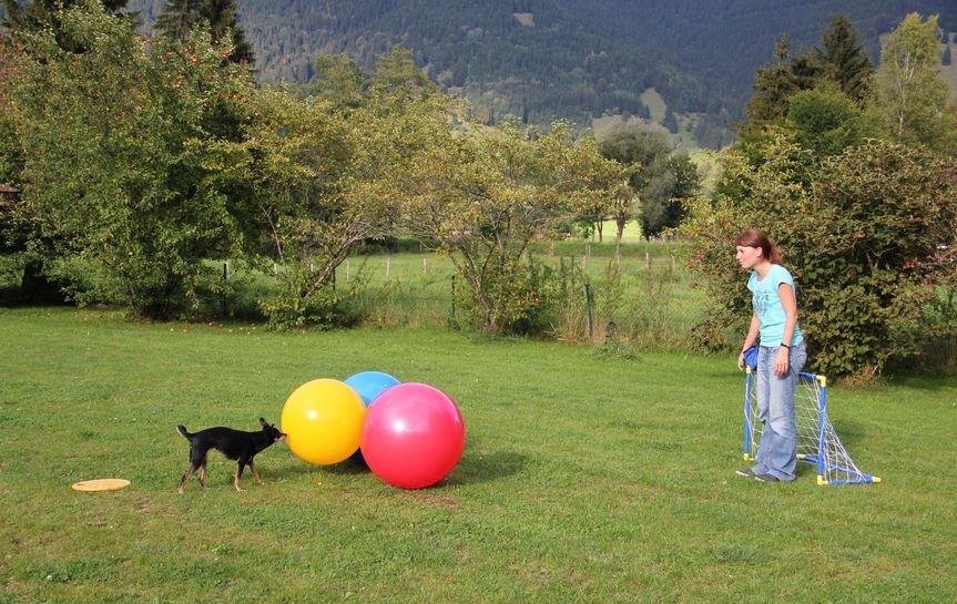 Treibball für Hunde – der vielseitige Trendsport