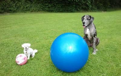 Treibball – Welche Größe des Balles passt zu meinem Hund?