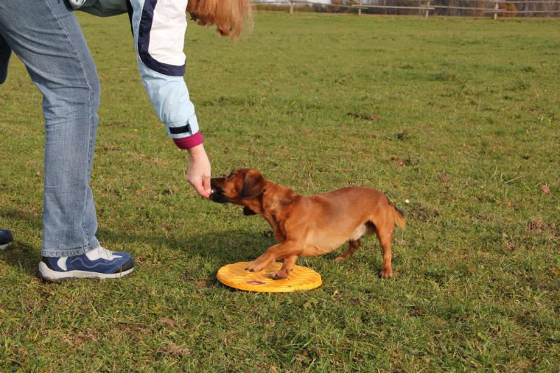 Clicker, Marker, Lobworte und die Wahl der passenden Belohnung für Deinen Hund