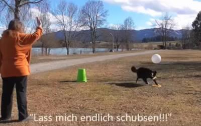 Versteht Dein Hund Deine Wortsignale und Sichtzeichen beim Treibball wirklich?