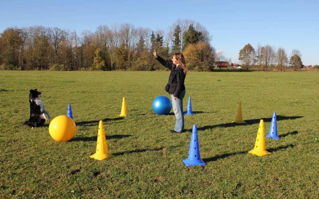 Seminar Treibball und kreatives Longieren am 24./25. Oktober 2020 in 64354 Zeilhard