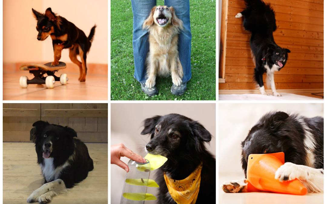 Tricktraining und Hundespiele für Zuhause am 06./07. April 2019 in 71229 Leonberg-Eltingen