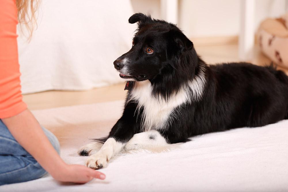 Mehrere Hundetricks lernen und dadurch mehr Spaß und Erfolg im Training – auch mit Zappelhunden und Energiesparmodellen
