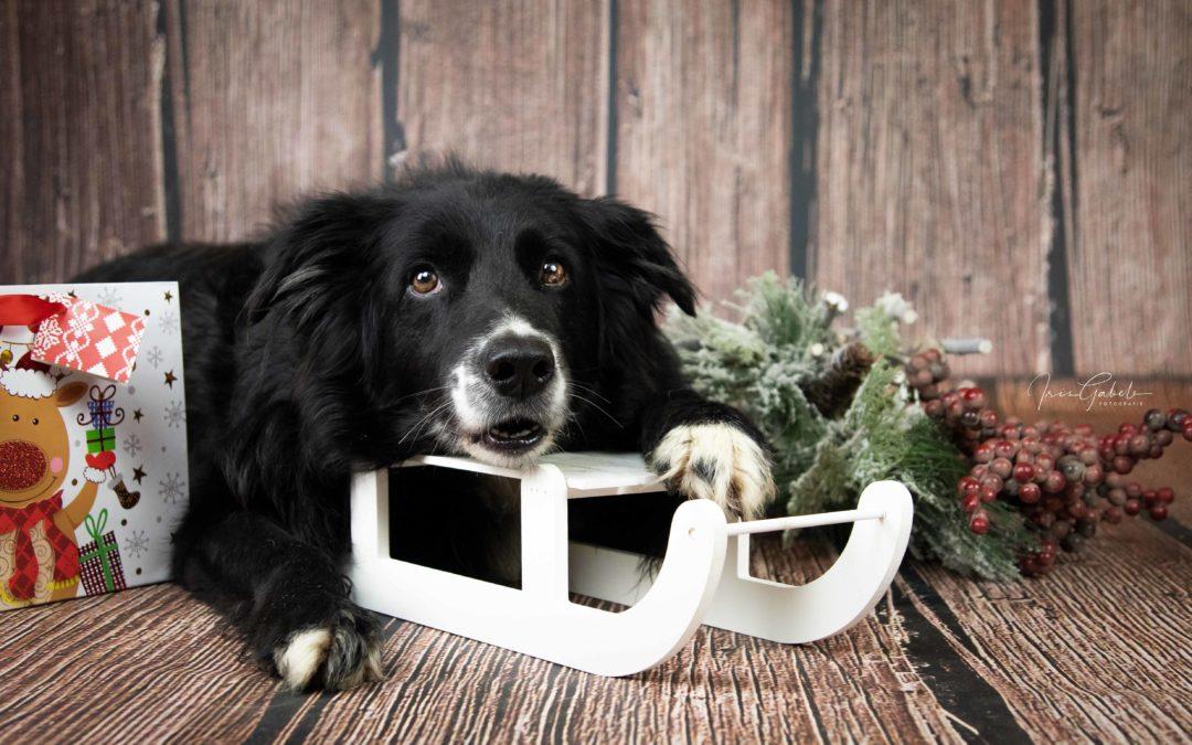 Hundespiele für Zuhause und unterwegs