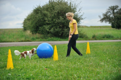 Treibball - Hund lernt lenken